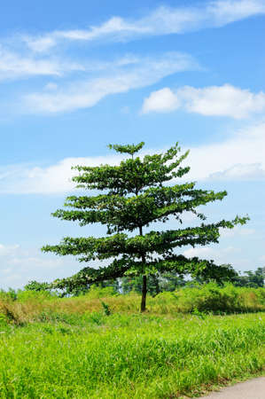 lazarus: A tree against cloudy blue sky on Lazarus Island in Singapore
