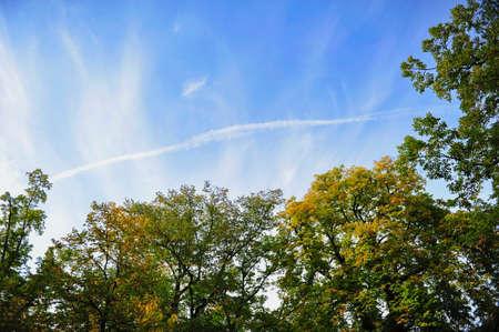 wispy: Autumn leaves against blue skies with wispy clouds in Zurich, Switzerland Stock Photo