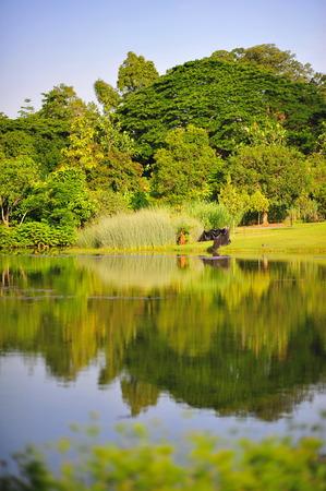 botanic: Reflections at Singapore Botanic Gardens