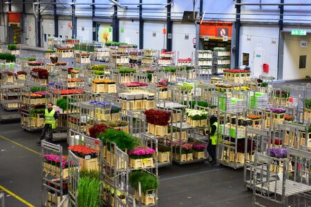staging: AMSTERDAM - SEPTEMBER 22: Carts of various variety of flowers staging at Aalsmeer FloraHolland, taken on September 22, 2014 in Amsterdam, Netherlands Editorial
