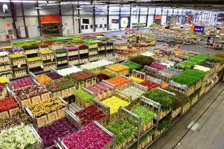 AMSTERDAM - SEPTEMBER 22: Carts of various variety of flowers staging at Aalsmeer FloraHolland, taken on September 22, 2014 in Amsterdam, Netherlands Editorial