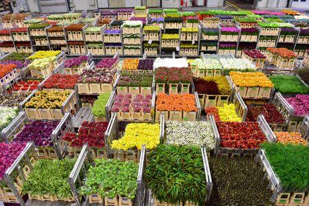 AMSTERDAM - SEPTEMBER 22: Carts of various variety of flowers staging at Aalsmeer FloraHolland, taken on September 22, 2014 in Amsterdam, Netherlands Éditoriale