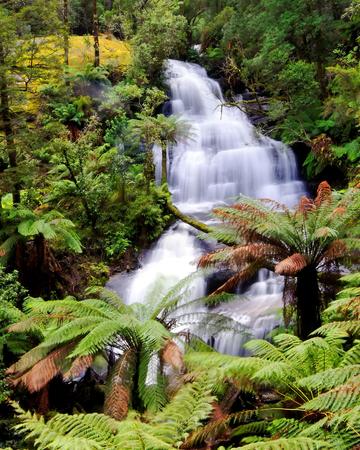 triplet: Beautiful Triplet falls in Australian forest