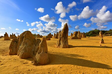 western australia: The Pinnacles Dessert famous for its limestone rock formations, in Nambung National Park