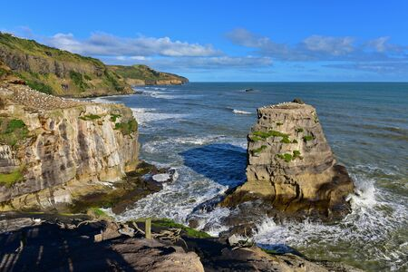 Colony of gannets at Muriwai Beach in New Zealand Stock Photo