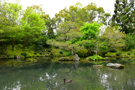 Japanese Garden of Contemplation in Hamilton Gardens in New Zealand Stock Photo