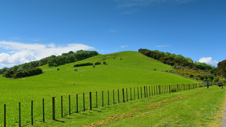 Hill at Duder Regional Park, an open farm in Auckland, New Zealand Stock Photo
