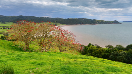 Parque Regional Duder, un parque agrícola costero junto al golfo de Hauraki en Nueva Zelanda Foto de archivo