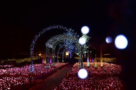 Un jardin lumineux à Nabana no Sato à Nagoya, Japon