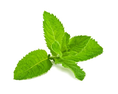 menthol: Pepper mint leaves, isolated on white background