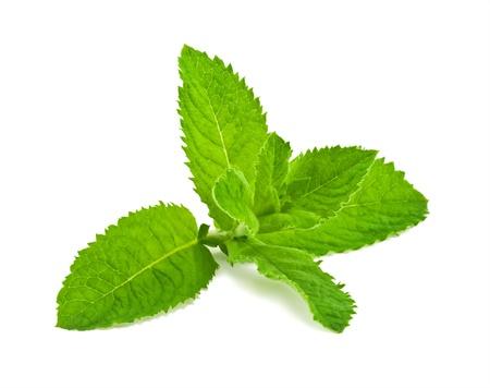 menta: Pimienta hojas de menta, aisladas sobre fondo blanco Foto de archivo