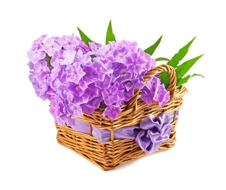 beautiful phlox in the basket  photo