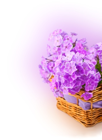 phlox in the basket photo