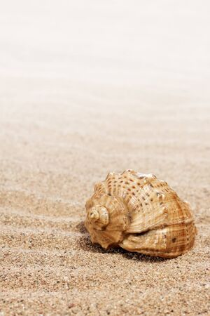 shells on the sand   photo