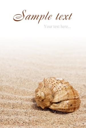 sea shells on the sand photo