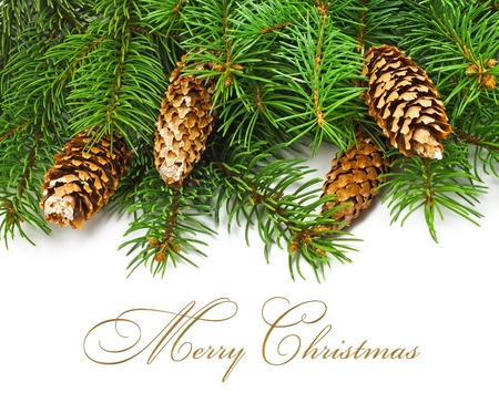 branch of christmas tree and cones on white background  photo