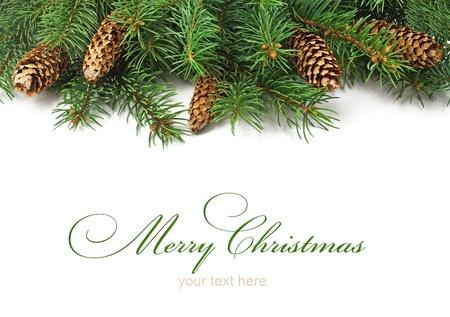 evergreen branch: rama del �rbol de navidad y conos sobre fondo blanco