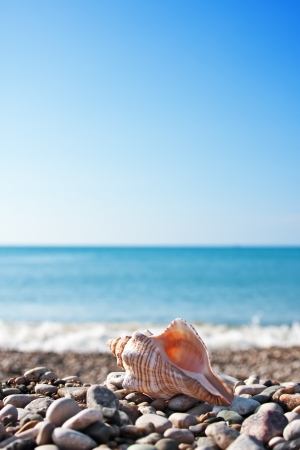 Sea shell with sea and blue sky on background Stock Photo - 14494953