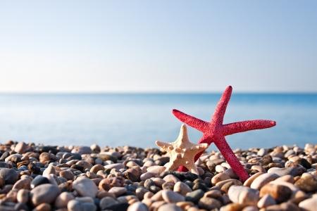 Two starfish on the beach photo