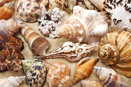 Sea shell on sand background photo