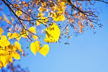 Autumn leaves against blue sky photo