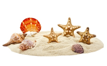 Seashells and starfish on pile of sand isolated on white photo