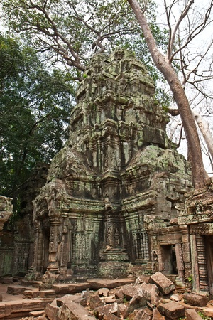 reap: Ta Prohm Temple, Angkor Wat, Siem Reap, Cambodia