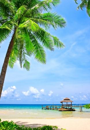 Palmera en la playa perfecta tropical en Koh Kood, Tailandia