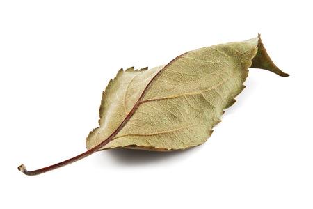flores secas: Hoja seca aislada en un fondo blanco
