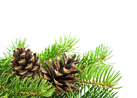 Christmas tree and cones on white background