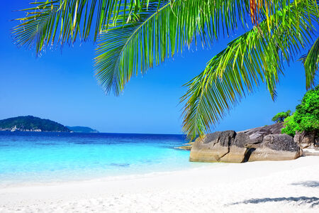 Tropical white sand beach with palm trees photo