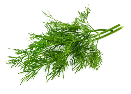 fresh dill isolated on white  스톡 콘텐츠