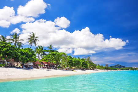 samui: Tropical white sand with palm trees at Chaweng Beach. Koh Samui, Thailand