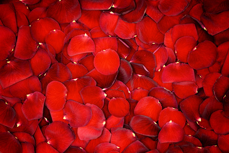 Schöne rote Rosenblätter Hintergrund Standard-Bild - 35390774
