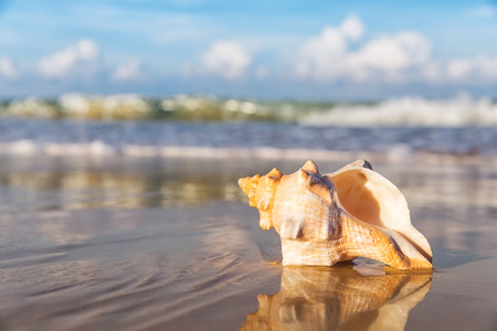 summer landscape: Sea shell on the sandy beach Stock Photo