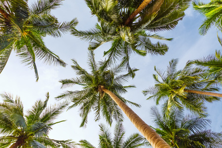 Coconut palm trees perspective view 스톡 콘텐츠