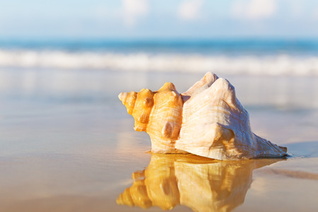 Sea shell on the sandy beach 스톡 콘텐츠