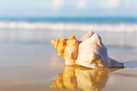 Sea shell on the sandy beach Foto de archivo