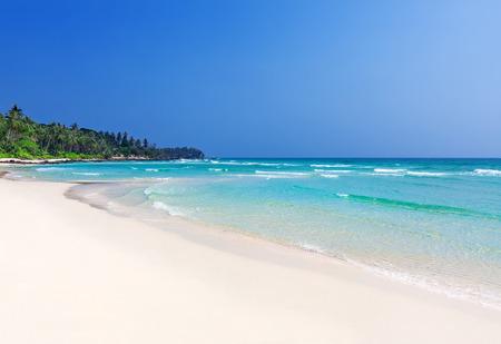 タイ トラート ‐ クード島で熱帯の完璧なビーチのヤシの木