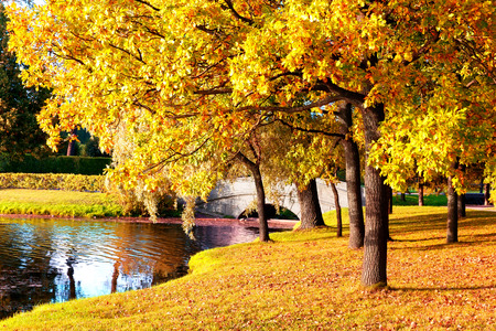 hojas secas: Bosque hermoso del otoño en parque de Pushkin, San Petersburgo, Rusia Foto de archivo
