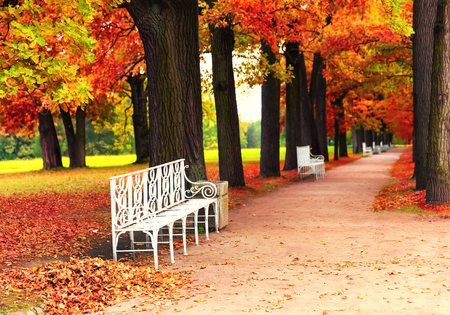White park bench in the park in fall time Foto de archivo