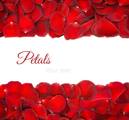 Beautiful red rose petals on a white background Zdjęcie Seryjne