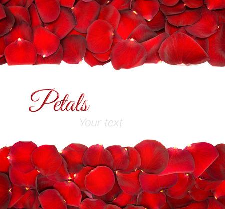 Schöne rote Rosenblätter auf einem weißen Hintergrund