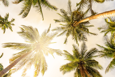 Coconut palm trees perspective view Stock Photo