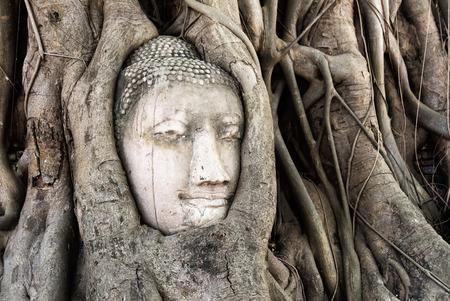 cabeza de buda: Buddha head in root tree at Wat Mahathat. Ayutthaya, Thailand Foto de archivo