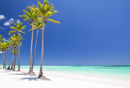 cana: Coconut Palm trees on white sandy beach in Cap Cana, Dominican Republic