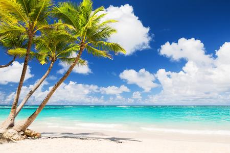 푼타 카나, 도미니카 공화국에서 하얀 모래 해변에서 코코넛 팜 나무 스톡 콘텐츠 - 58556865