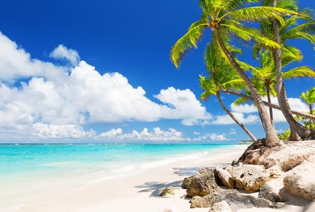Coconut Palm bomen op het witte zandstrand in Punta Cana, Dominicaanse Republiek