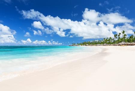코코넛 야자수 하얀 모래 Bavaro 해변에서 푼 타 Cana, 도미니카 공화국 스톡 콘텐츠 - 58556875