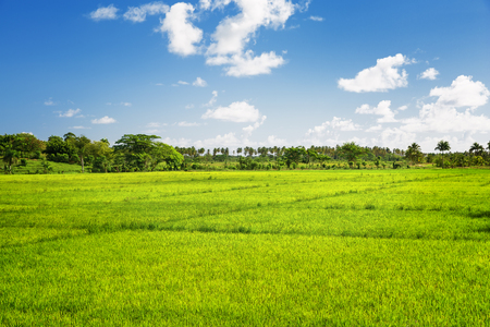 grass and sky: lush green grass field and blue sky Stock Photo